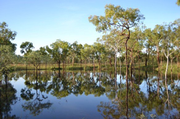 A billabong along the way -beautiful reflections