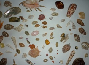Some of the lovely shells I still have in my collection.