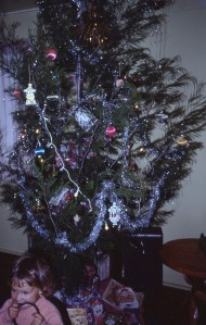 This year the Xmas tree was a casuarina.