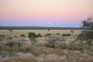 Near Renner Springs NT