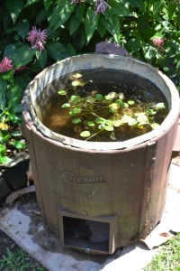 An old laundry copper recycled as a water feature in the NT. Photo P Cass.
