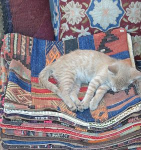 No dessert needed here...this kitten is super-chilled out...well resting comfortably in the morning sunshine.