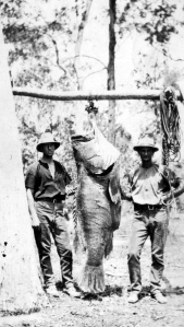 Jack Kinnon and grouper
