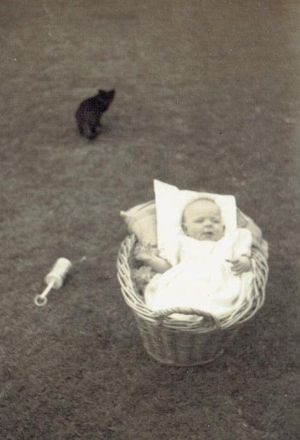 Pauleen in basket with kitten