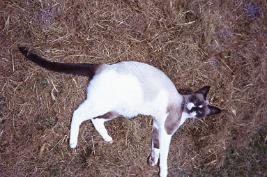 Our lovely Brandi cat