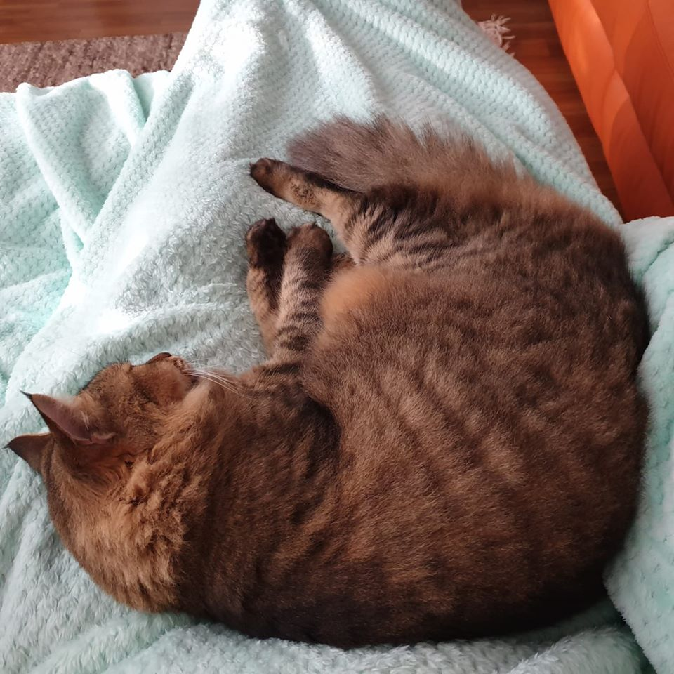springer cuddles